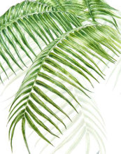 Ferns of Pitcairn